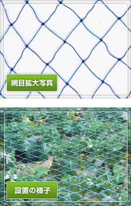 青色強力防鳥網 (大)3㎝目